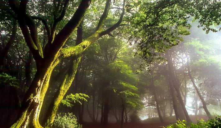 Le Mont Beuvray et sa forêt à l'ambiance féérique