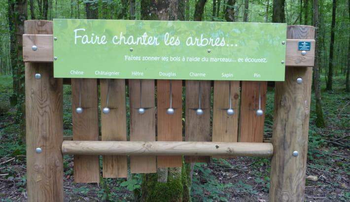 Xylophone dans le bois de la Brosse