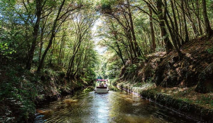 Balade en bateau électrique au départ de l'étang de Baye