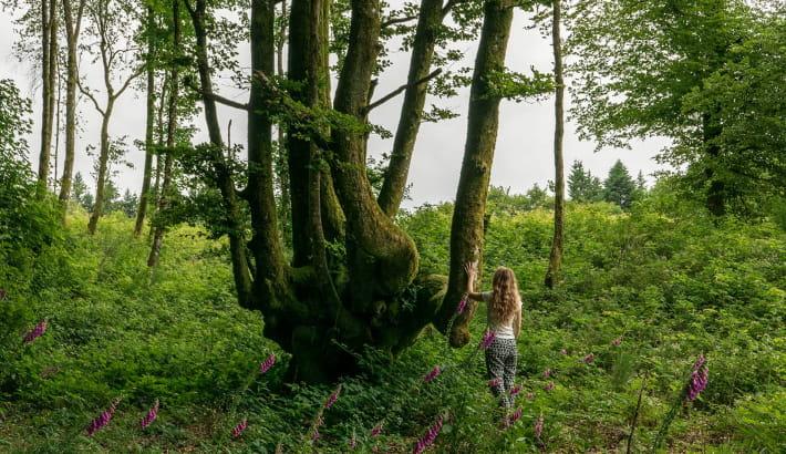 Rencontre avec une queule dans la forêt du mont Beuvray
