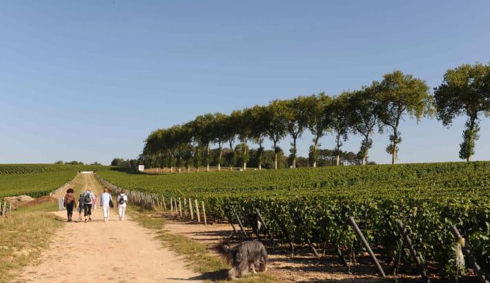 Balade dans les vignes de Pouilly