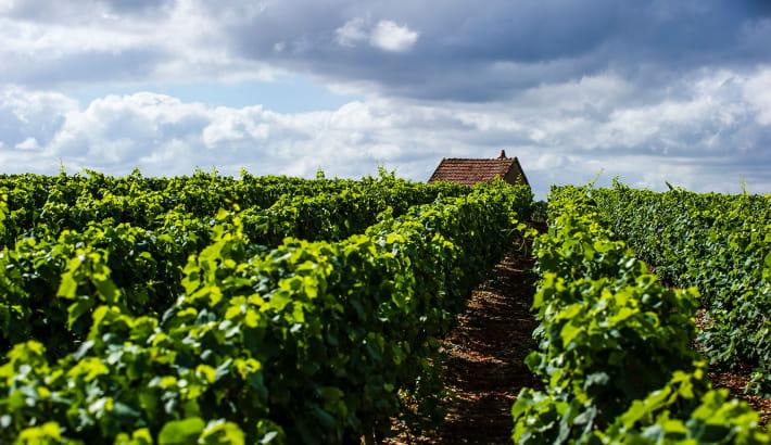 Pique-nique dans les vignes de Pouilly-sur-Loire