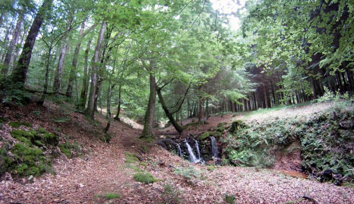 Sentier en forêt du Morvan,