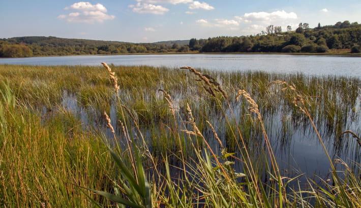Etang Taureau proche de la Maison du Parc Naturel du Morvan