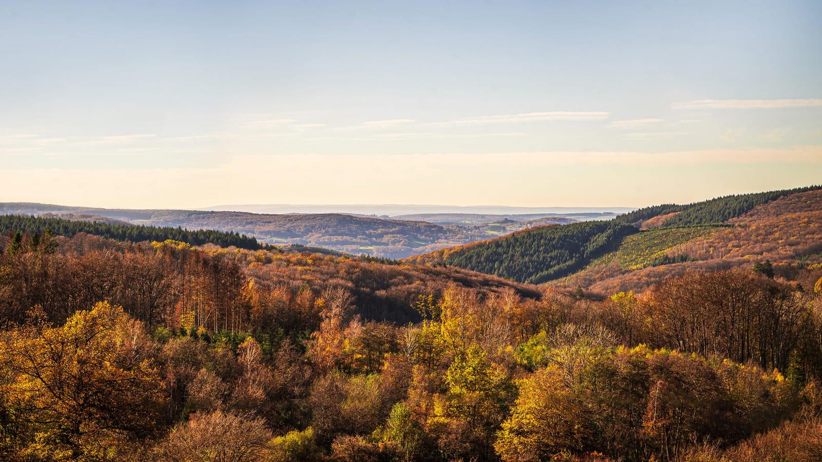 Vue aérienne sur les forêts du Morvan