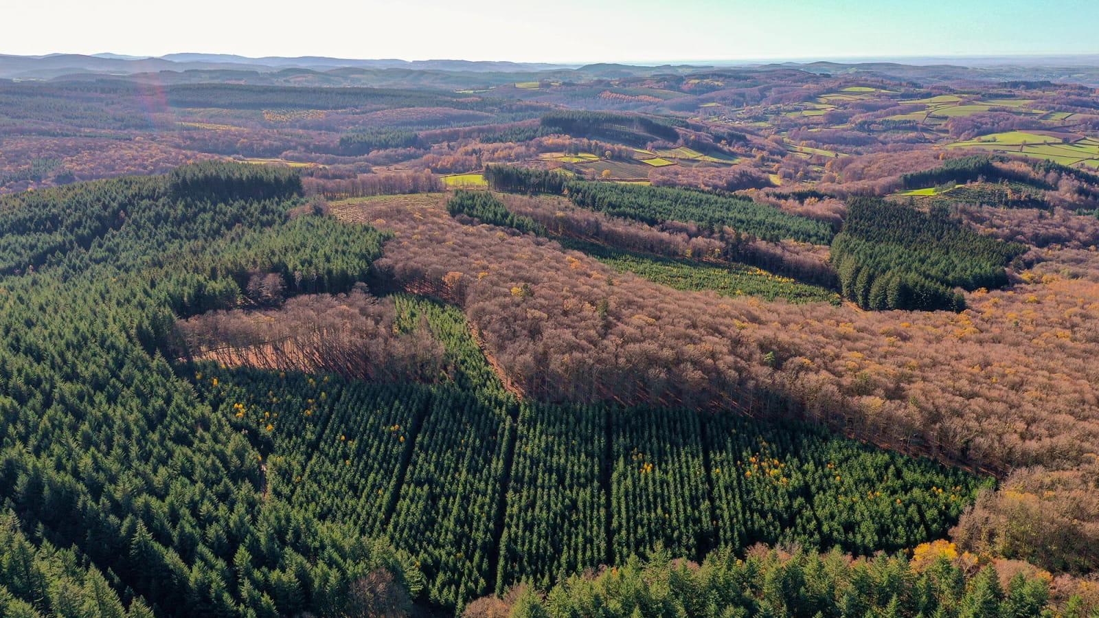 Forêts du Morvan
