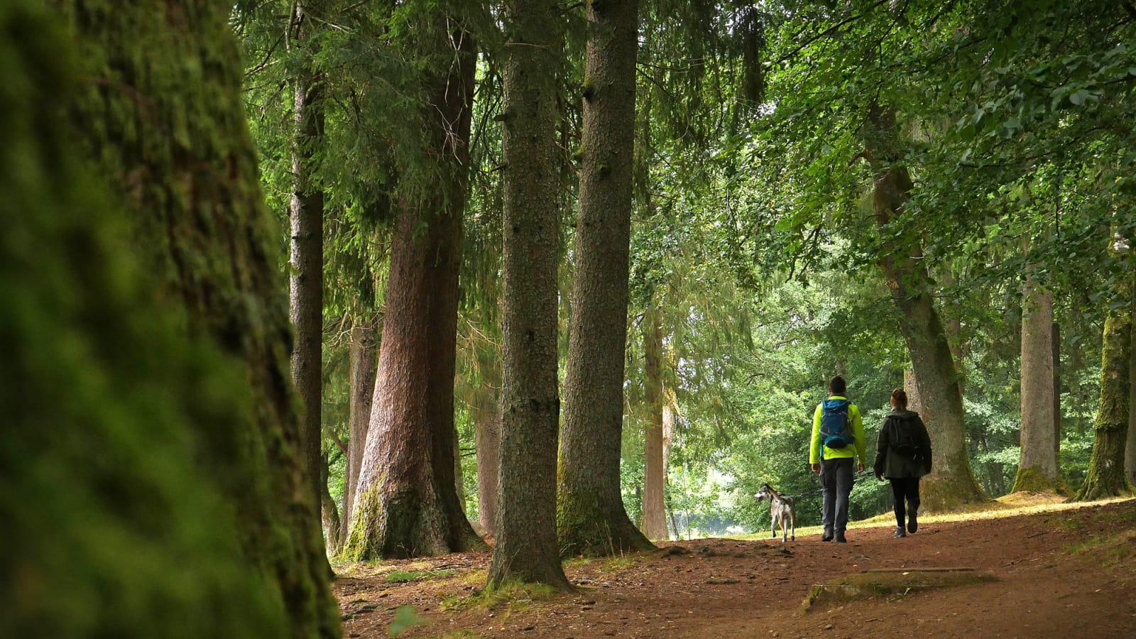 Randonnée dans la forêt du Morvan