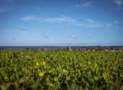 Vignoble de Tannay