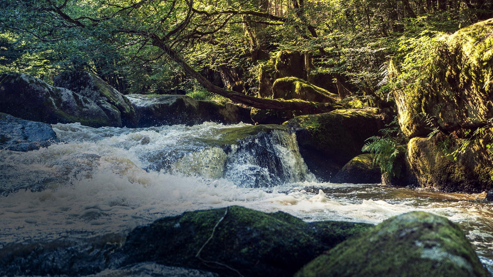 Les eaux vives du Chalaux dans le Morvan